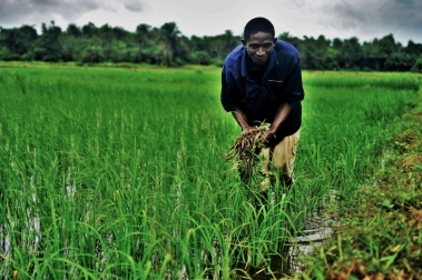 Usman weeds his plot (002).jpg